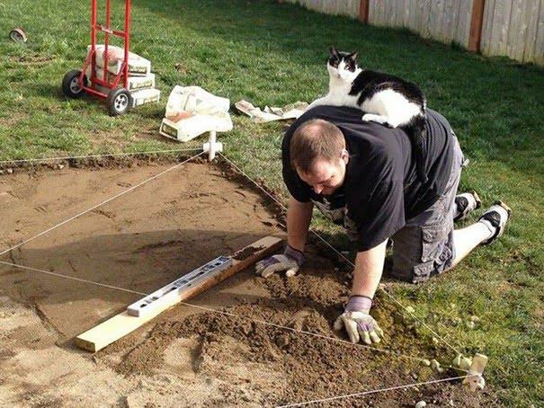 Кішки, які не мають жодного поняття про особистий простір - 17 курйозних фотографій мурлик - фото 15