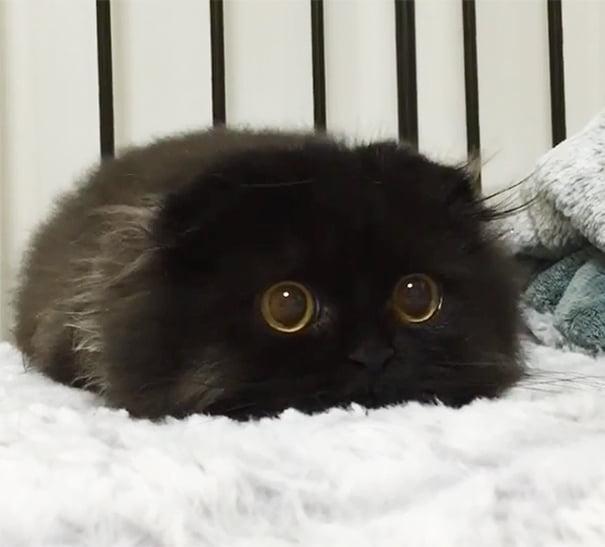 Для підняття настрою в локдаунний вікенд: 17 фото кошенят, мімімішність яких зашкалює - фото 17