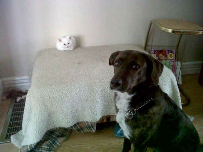 Кошки - правдивые фото, в которых отражена вся суть их натуры  - фото 13