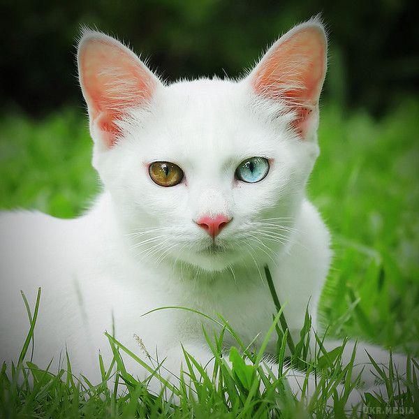 До 40 тыс. евро: 10 фото самых дорогих кошек - кроме безумной цены, они еще и невероятно милые - фото 9