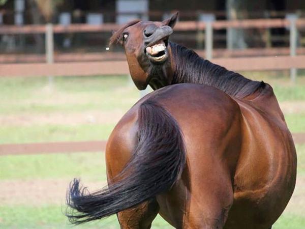 Порция позитива: фото самых нефотогеничных животных  - фото 12