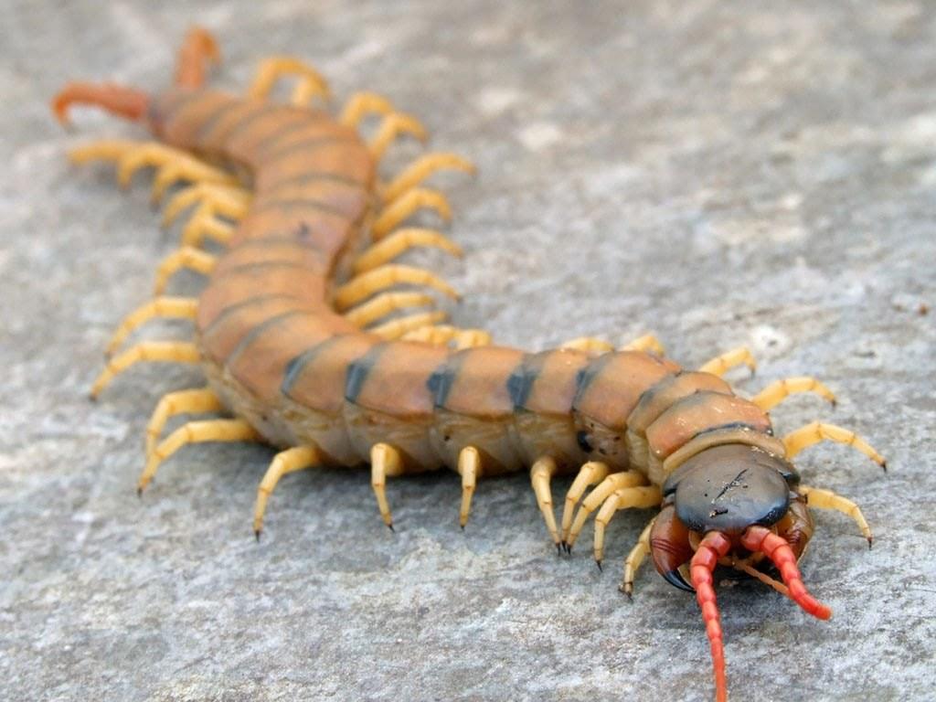 Топ комах-гігантів з усього світу - фото 8