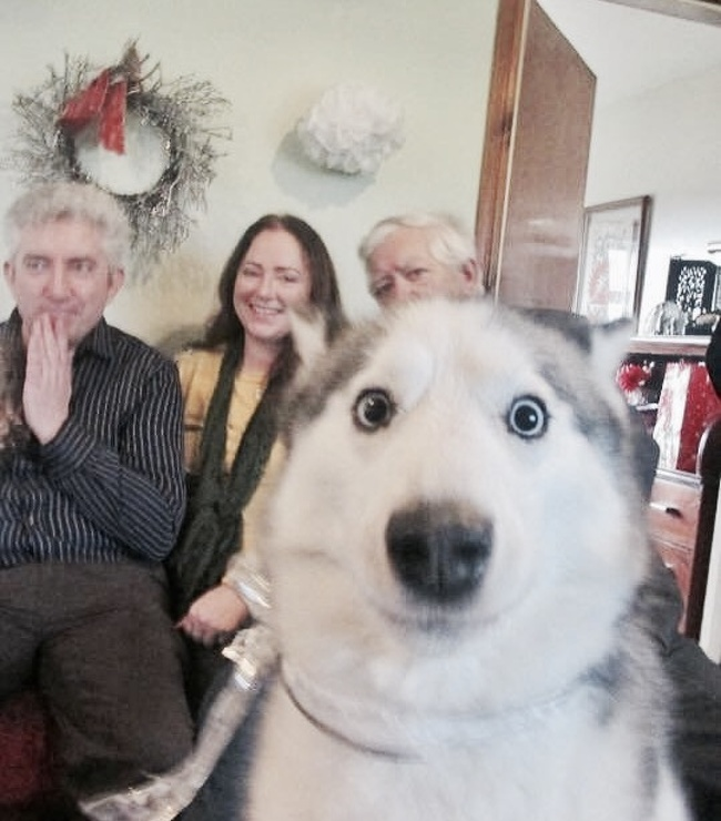 Смішні витівки собак, які змусять вас посміхнутися (Фото) - фото 7