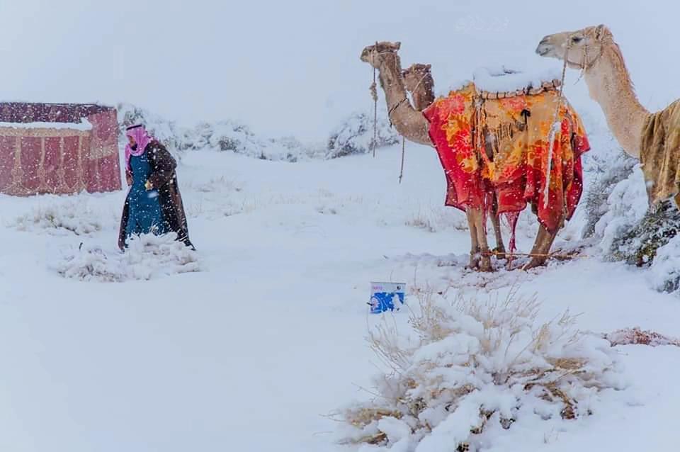В Сахаре выпал снег — удивительные фото морозной пустыни - фото 2