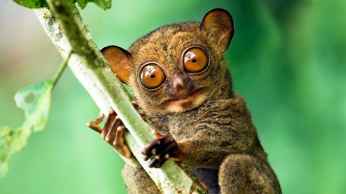 Для хорошего настроения: подборка фото забавных зверюшек со всего мира - фото 6