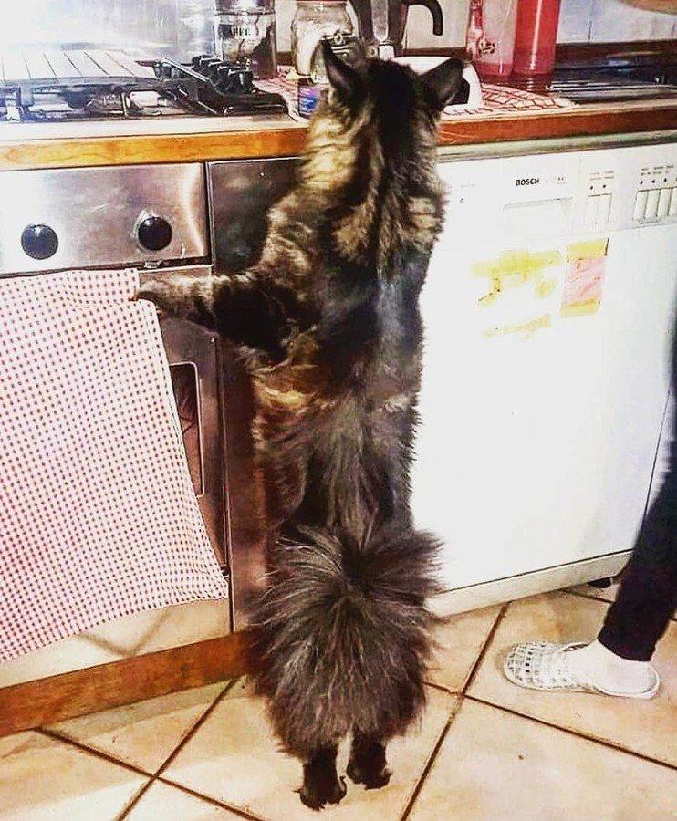 В Италии живет самый длинный кот в мире. Как он выглядит (Фото) - фото 2