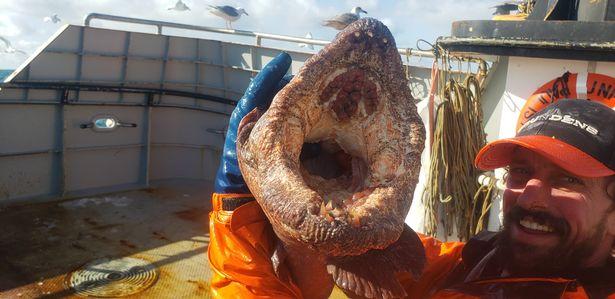 На Аляске рыбак поймал настоящего «морского монстра» (ФОТО) - фото 4