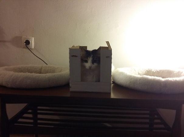 15 фото кошек, которые не оценили подарков от хозяев - фото 11