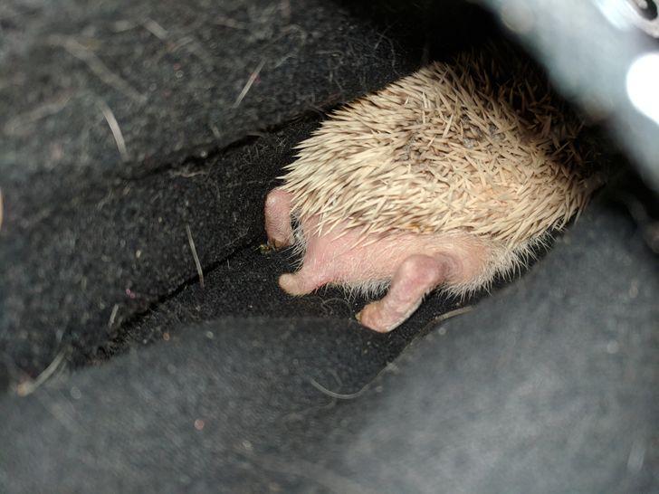 Спят усталые зверушки - фотографии животных, которые заснули в случайных местах  - фото 12