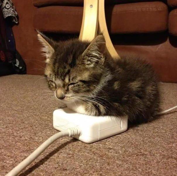 Для підняття настрою в локдаунний вікенд: 17 фото кошенят, мімімішність яких зашкалює - фото 15