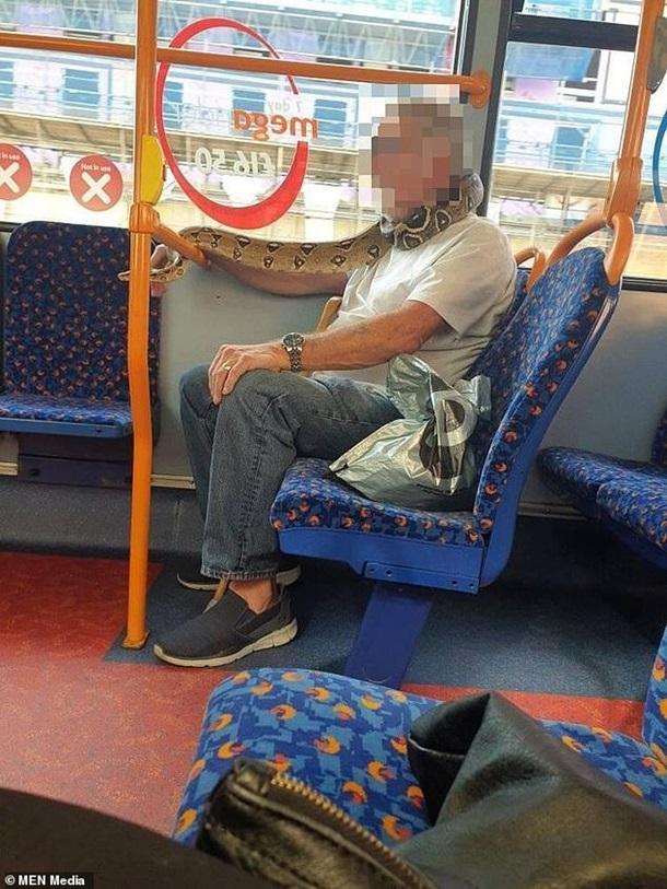 Британец шокировал пассажиров автобуса, надев в качестве маски живую змею (фото, видео) - фото 2