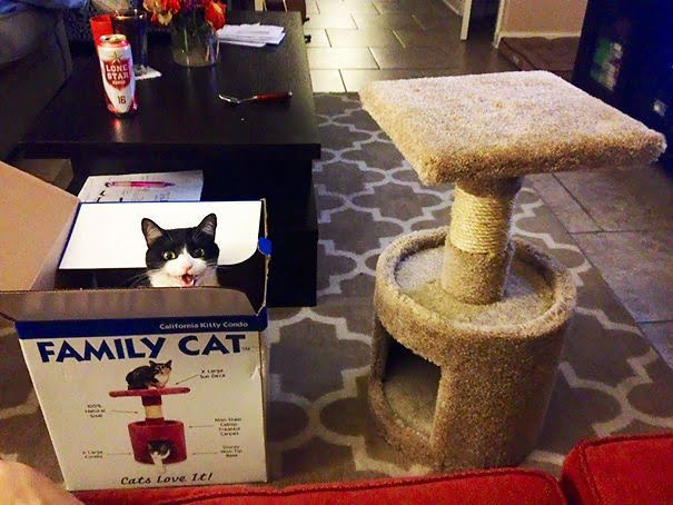 15 фото кошек, которые не оценили подарков от хозяев - фото 2