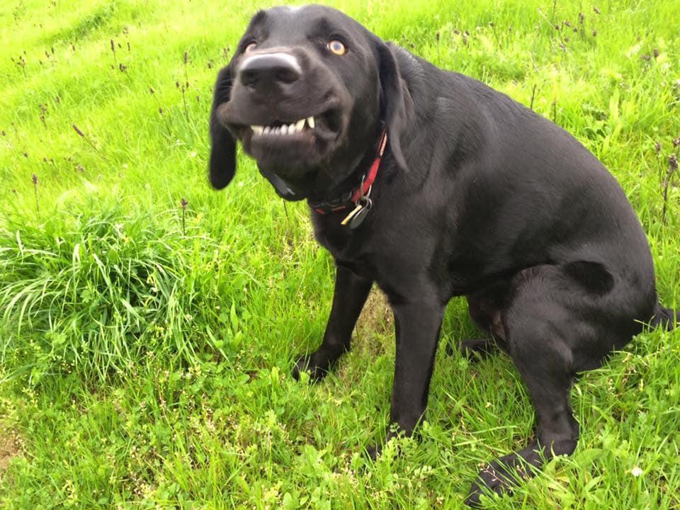 Порция позитива: люди поделились самыми нелепыми фото своих собак - фото 2