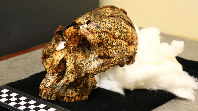 Ученые откопали  череп, которому 2 млн лет (Фото) - фото 4