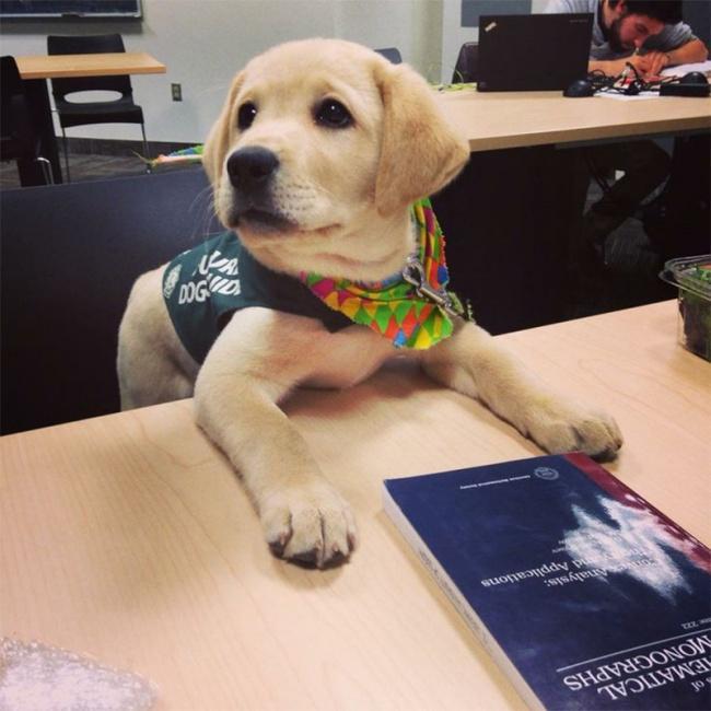 Порция позитива: собаки, которые явно возомнили себя человеком (фото) - фото 13