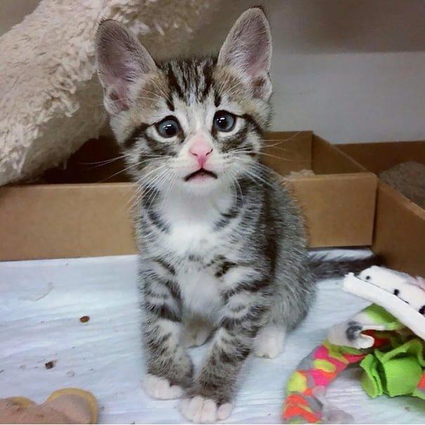 Для підняття настрою в локдаунний вікенд: 17 фото кошенят, мімімішність яких зашкалює - фото 8