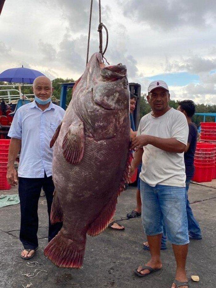 У Малайзії чоловік спіймав рибу вагою 161 кг (ФОТО) - фото 2
