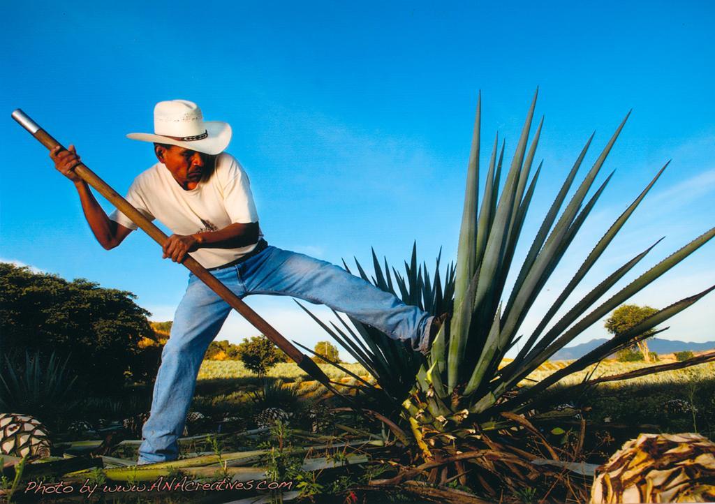Провести ночь в бочке из-под текилы: в Мексике открыли отель на территории завода по производству напитка - фото 13