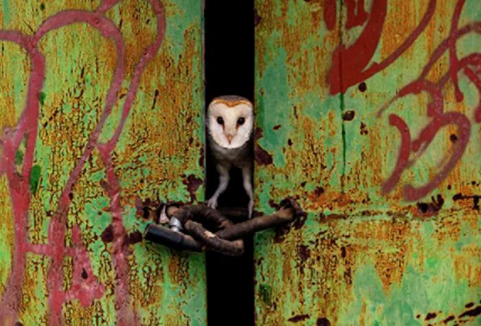 Фотографии дикой природы 2021: кто стал победителем (ФОТО) - фото 7