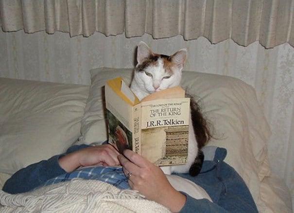 Кішки, які не мають жодного поняття про особистий простір - 17 курйозних фотографій мурлик - фото 2
