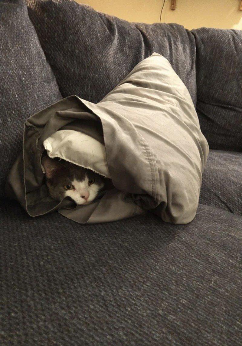 Кішки - це рідини, і цьому є докази - фото 5