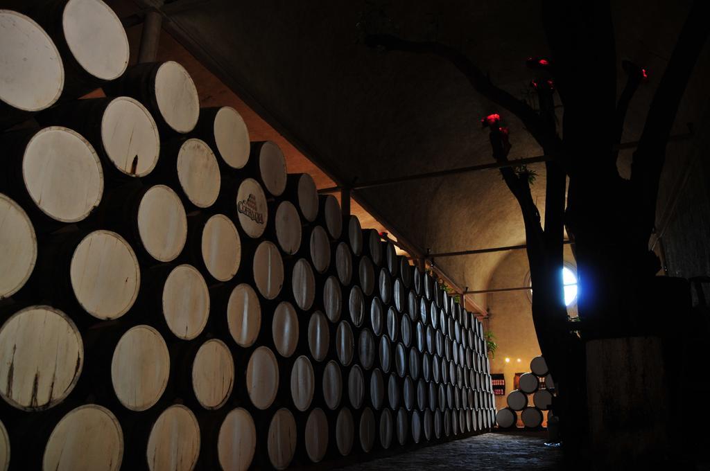 Провести ночь в бочке из-под текилы: в Мексике открыли отель на территории завода по производству напитка - фото 15