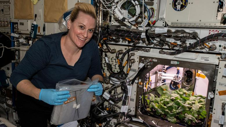 Фотофакт: астронавты собрали урожай редиса на МКС - фото 2