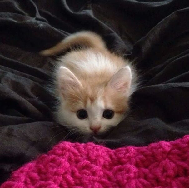 Для підняття настрою в локдаунний вікенд: 17 фото кошенят, мімімішність яких зашкалює - фото 7