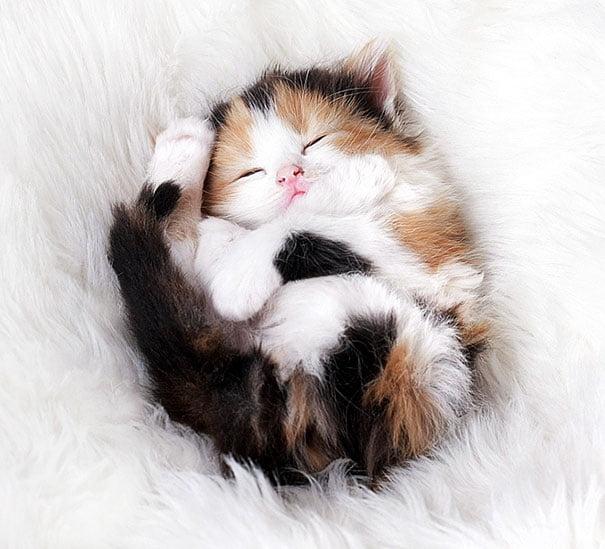 Для підняття настрою в локдаунний вікенд: 17 фото кошенят, мімімішність яких зашкалює - фото 3