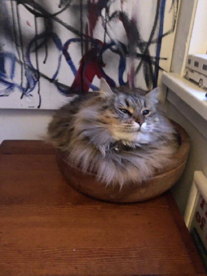Кішки - це рідини, і цьому є докази - фото 2