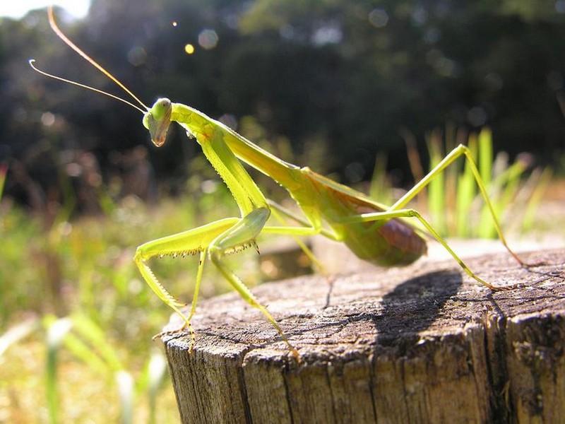 Топ комах-гігантів з усього світу - фото 6