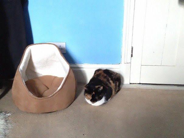 15 фото кошек, которые не оценили подарков от хозяев - фото 16