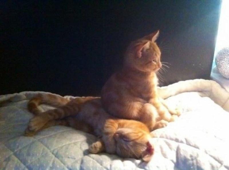Кошки - правдивые фото, в которых отражена вся суть их натуры  - фото 19