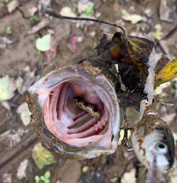 Мужчина поймал рыбу и ужаснулся, когда увидел, что у нее во рту - фото 2