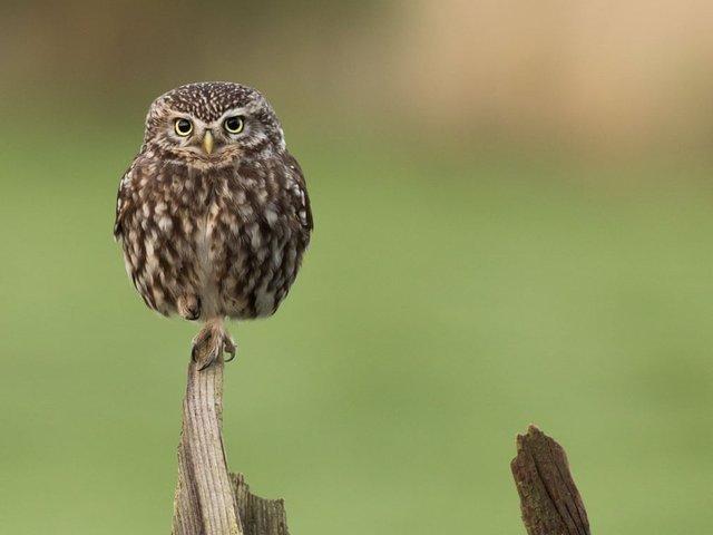 Неповторимый момент: лучшие фотографии природы за последние 10 лет  - фото 6