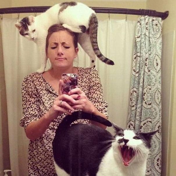 Кішки, які не мають жодного поняття про особистий простір - 17 курйозних фотографій мурлик - фото 12