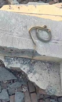 В Египте кобра убила всех пассажиров микроавтобуса (ФОТО) - фото 2