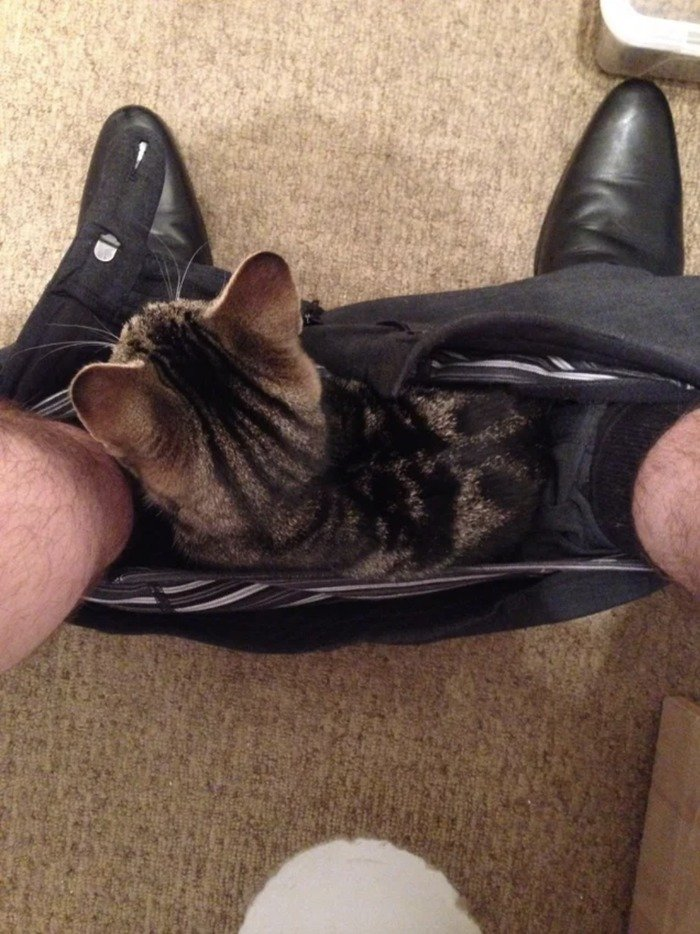 Кішки - це рідини, і цьому є докази - фото 16