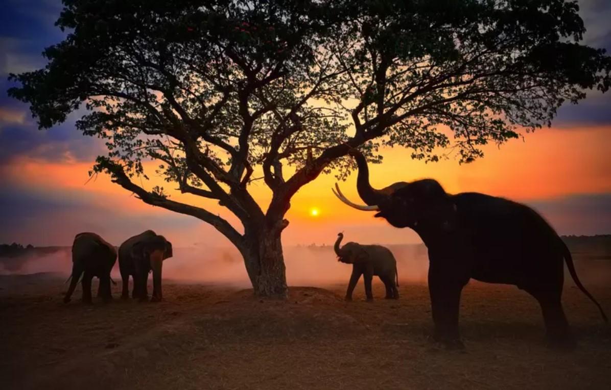 Лучшие снимки дикой природы от социальной сети Agora - фото 3