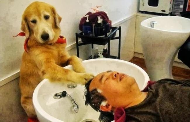 Порция позитива: собаки, которые явно возомнили себя человеком (фото) - фото 6