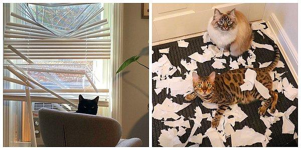 Кошки - правдивые фото, в которых отражена вся суть их натуры  - фото 15
