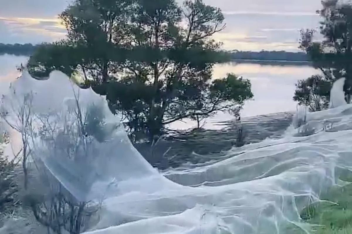 Города Австралии утопают в паутине: что известно (ФОТО)  - фото 2