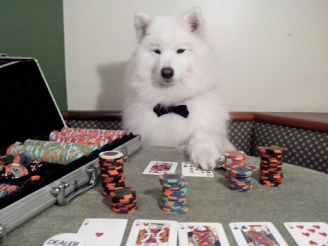 Порция позитива: собаки, которые явно возомнили себя человеком (фото) - фото 2
