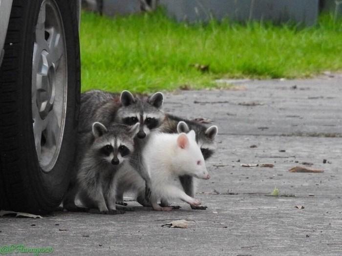 Пять необычных животных, о которых вы вряд ли слышали - фото 2