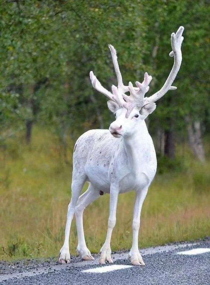 Фотографии животных, подобных которым вы еще не видели - фото 5