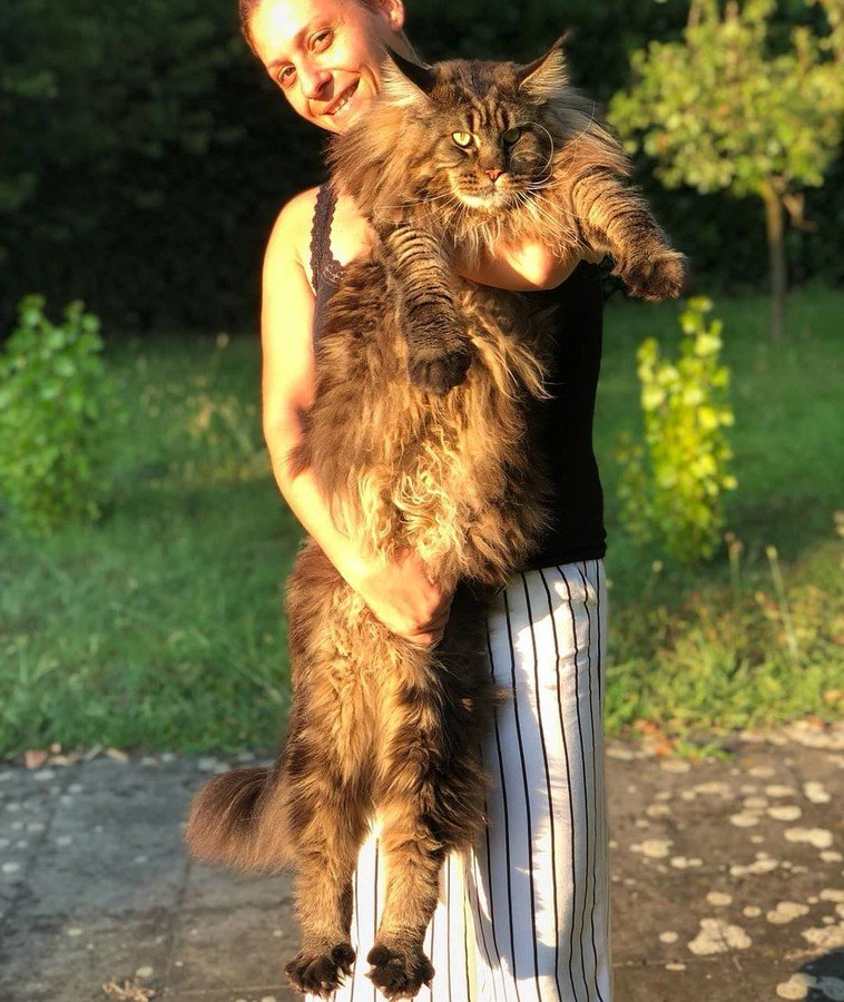 В Италии живет самый длинный кот в мире. Как он выглядит (Фото) - фото 5
