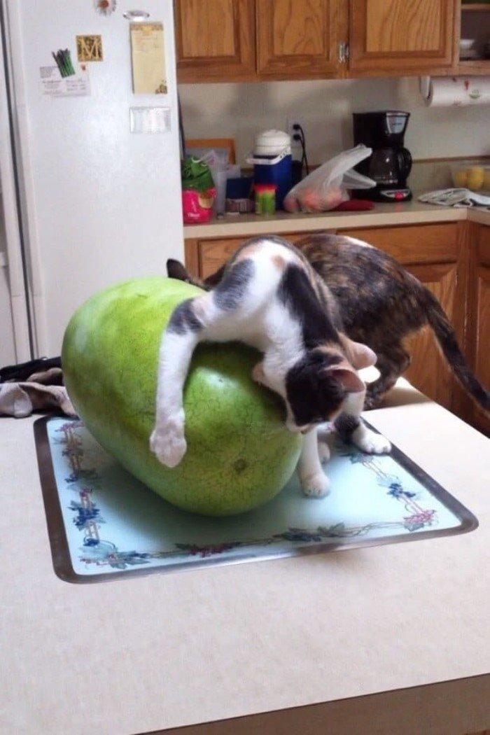 Когда кошки - главные в доме (Позитивные фото) - фото 8