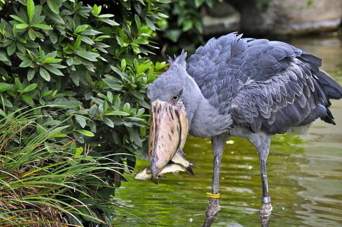 Пять необычных животных, о которых вы вряд ли слышали - фото 3