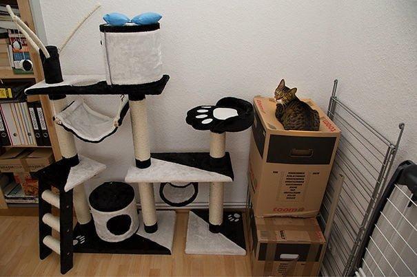 15 фото кошек, которые не оценили подарков от хозяев - фото 6