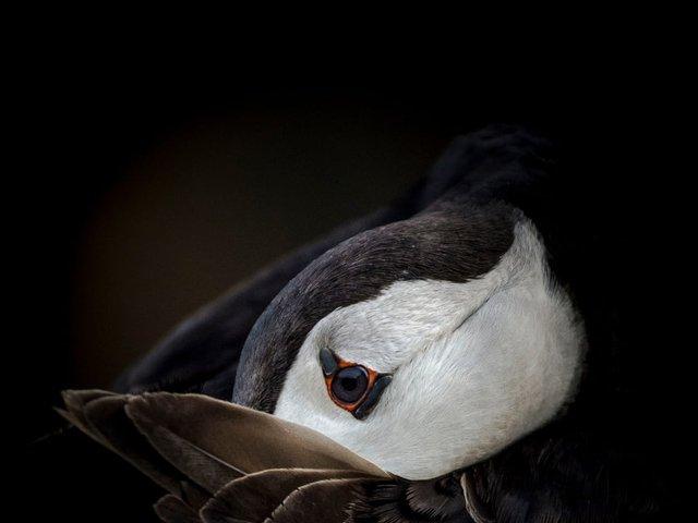 Неповторимый момент: лучшие фотографии природы за последние 10 лет  - фото 4